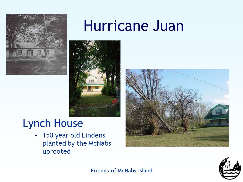 Friends of McNabs Island Hurricane Juan Lynch House –150 year old Lindens planted by the McNabs uprooted