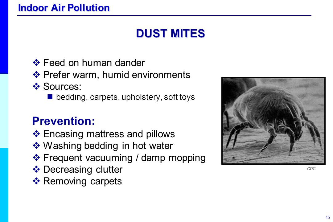 Indoor Air Pollution 45 DUST MITES   Feed on human dander   Prefer warm, humid environments   Sources: bedding, carpets, upholstery, soft toys P