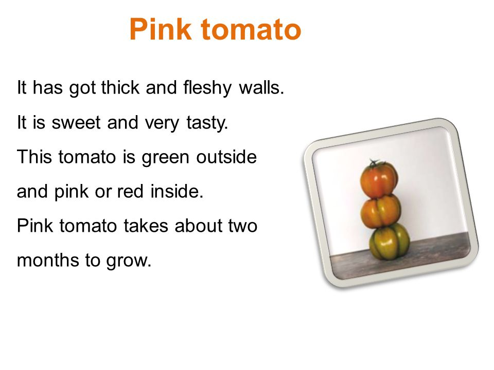 Pink tomato It has got thick and fleshy walls. It is sweet and very tasty. This tomato is green outside and pink or red inside. Pink tomato takes abou