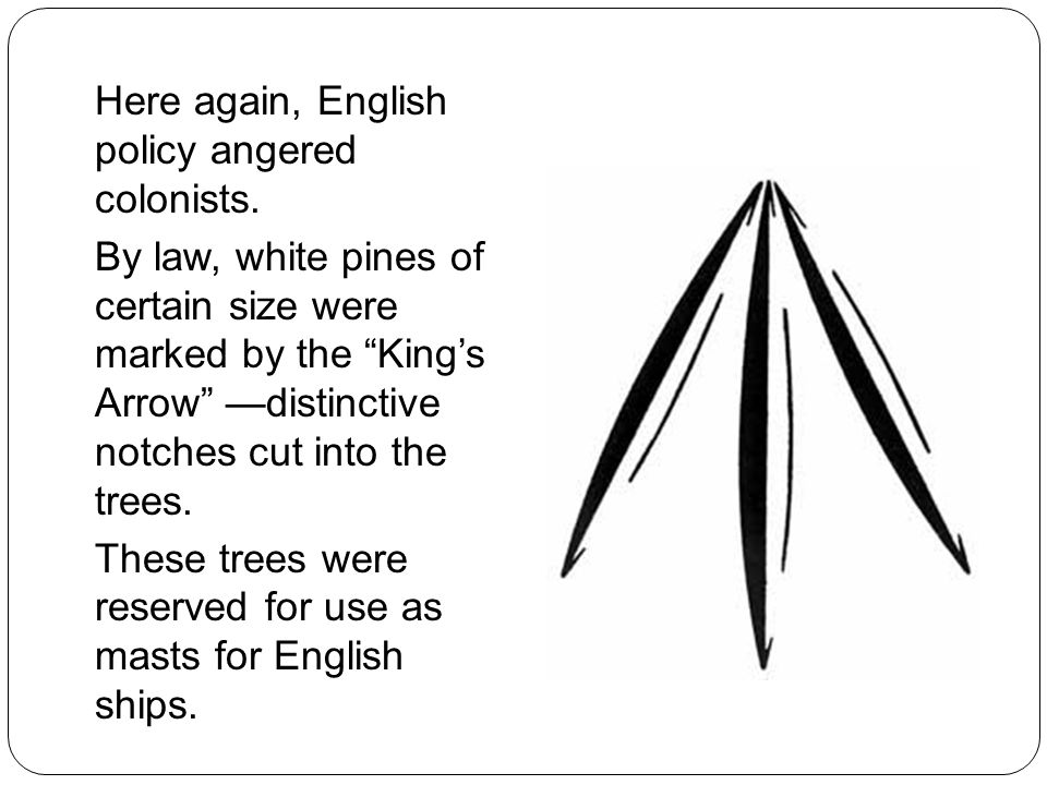 """Here again, English policy angered colonists. By law, white pines of certain size were marked by the """"King's Arrow"""" —distinctive notches cut into the"""