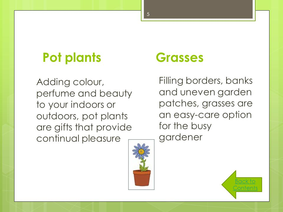 5 Pot plants Adding colour, perfume and beauty to your indoors or outdoors, pot plants are gifts that provide continual pleasure Grasses Filling borders, banks and uneven garden patches, grasses are an easy-care option for the busy gardener Back to Contents