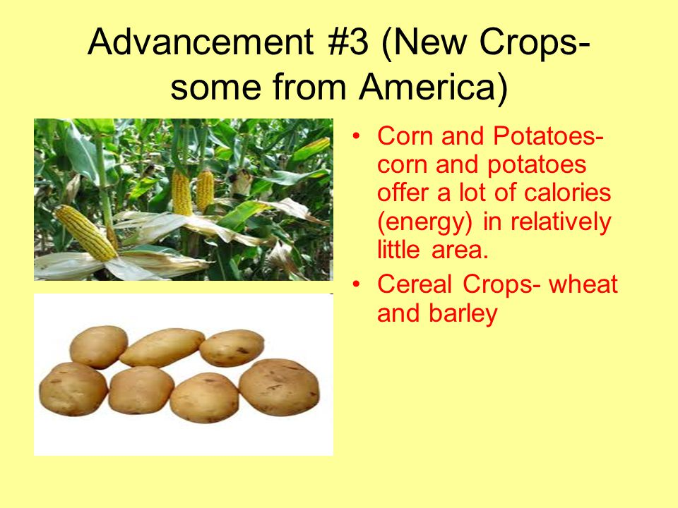 Advancement #3 (New Crops- some from America) Corn and Potatoes- corn and potatoes offer a lot of calories (energy) in relatively little area. Cereal
