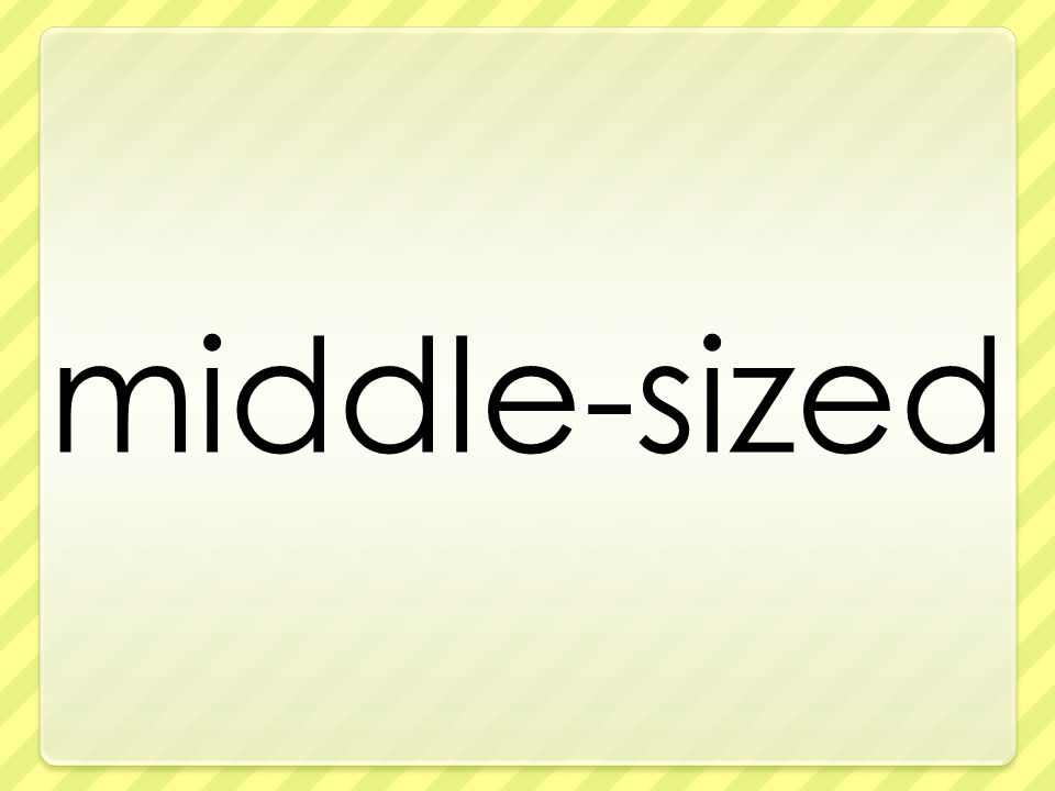 middle-sized