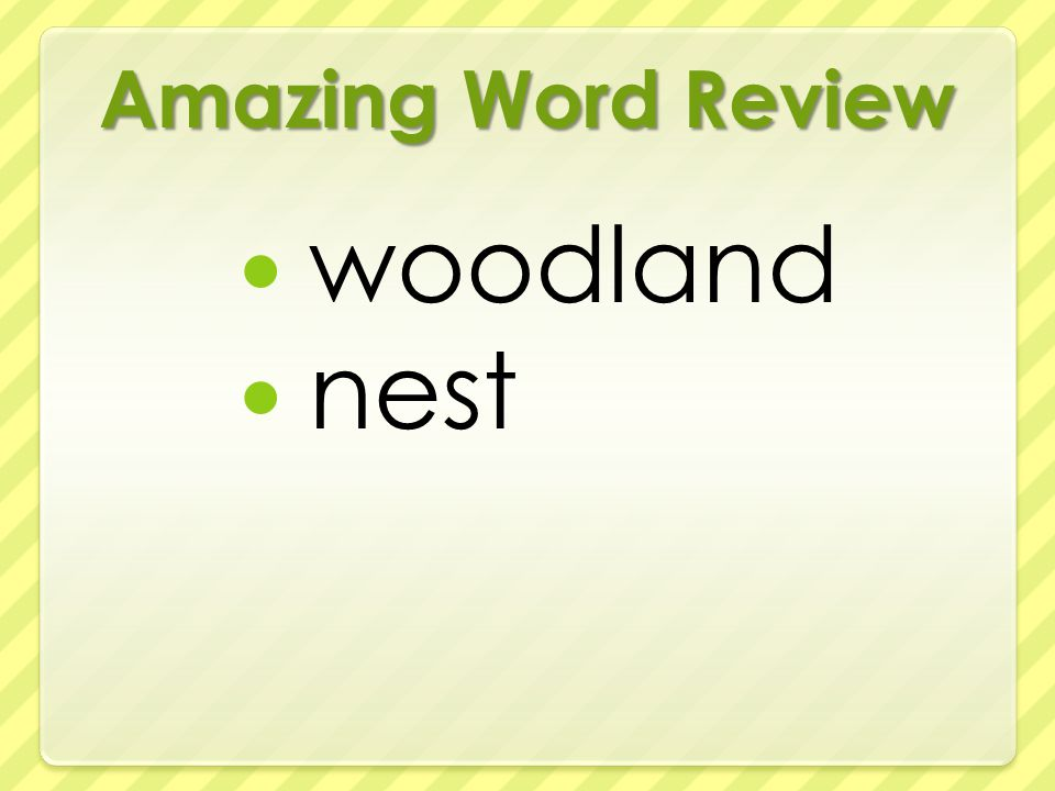 Amazing Word Review woodland nest