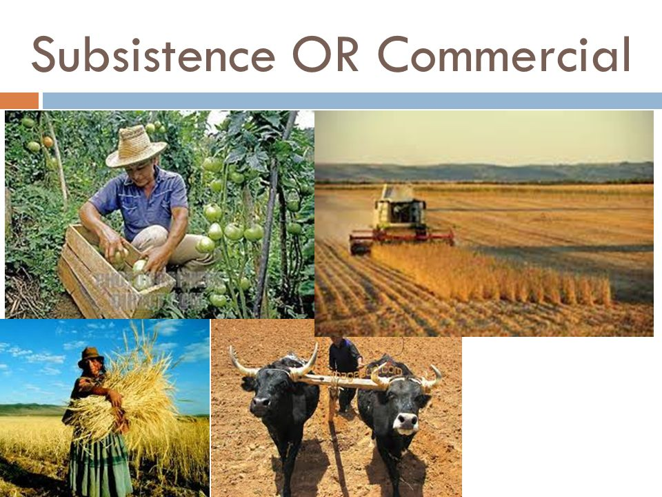 Subsistence OR Commercial