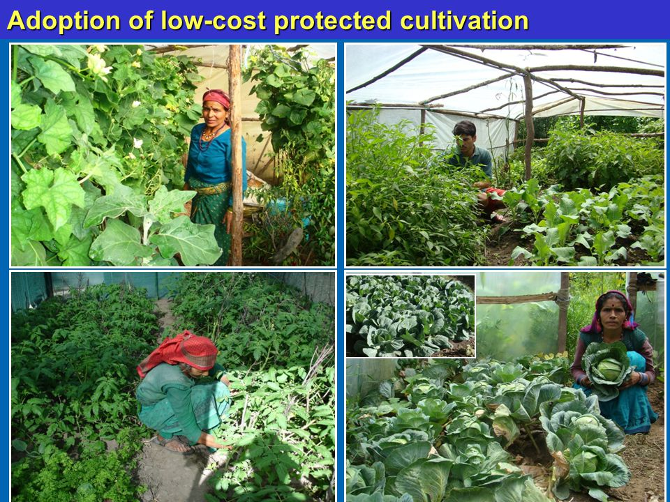 Adoption of low-cost protected cultivation Cont.