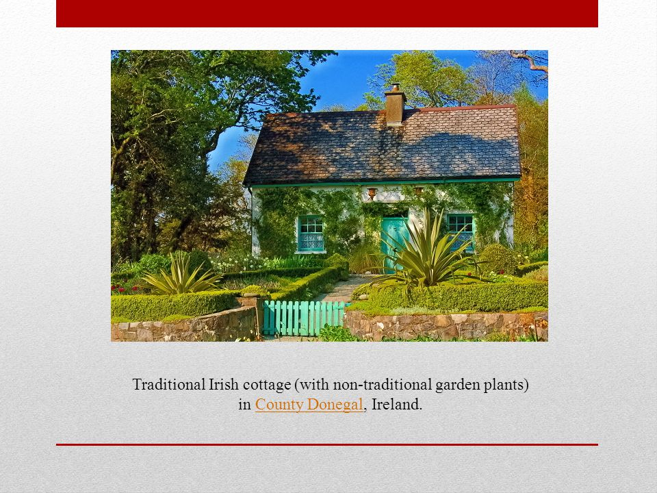 Traditional Irish cottage (with non-traditional garden plants) in County Donegal, Ireland.County Donegal