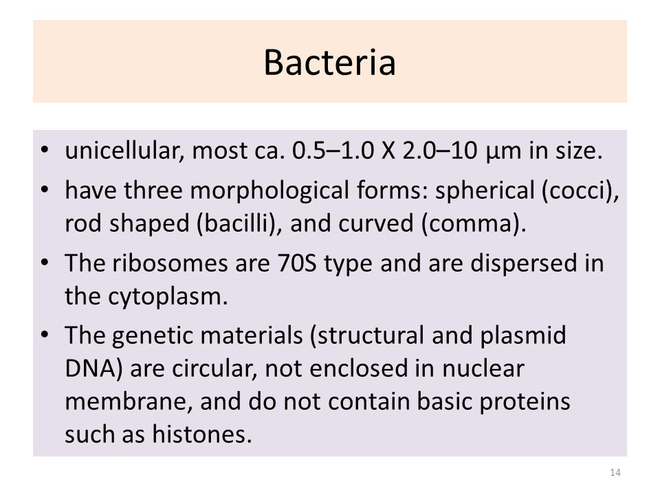 Bacteria unicellular, most ca. 0.5–1.0 X 2.0–10 µm in size. have three morphological forms: spherical (cocci), rod shaped (bacilli), and curved (comma