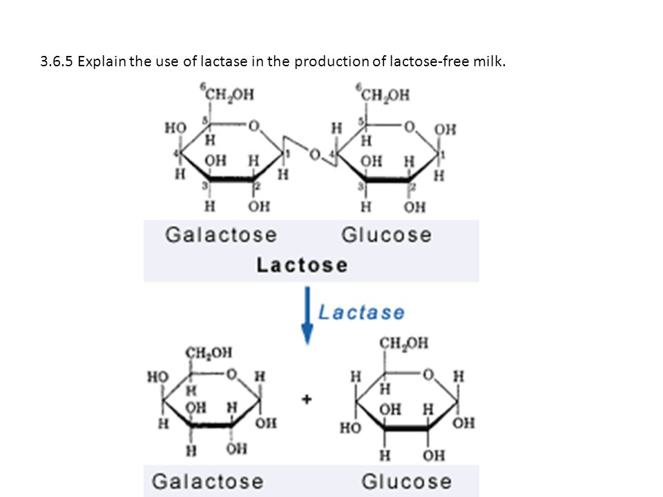 3.6.5 Explain the use of lactase in the production of lactose-free milk.