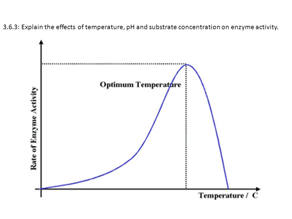 3.6.3: Explain the effects of temperature, pH and substrate concentration on enzyme activity.