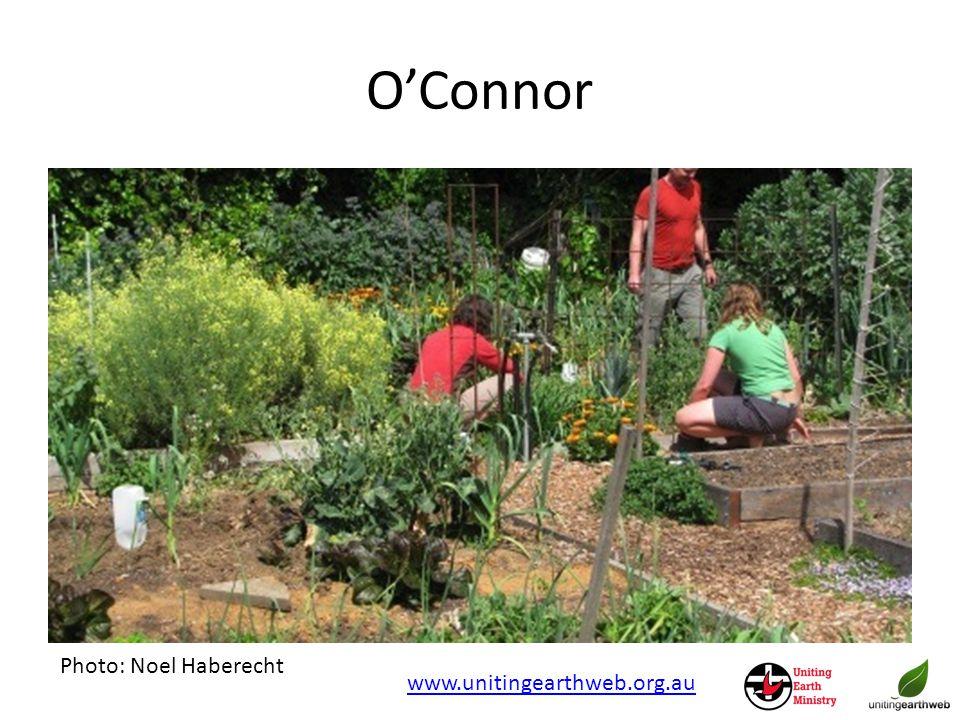 O'Connor Photo: Noel Haberecht www.unitingearthweb.org.au