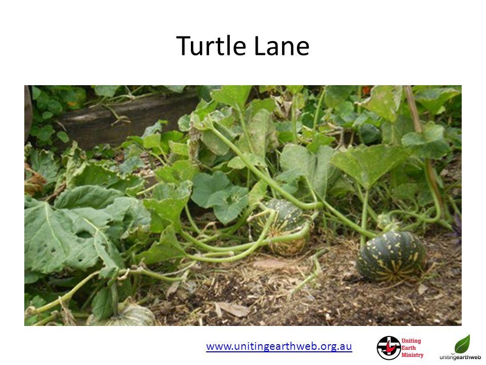 Turtle Lane www.unitingearthweb.org.au