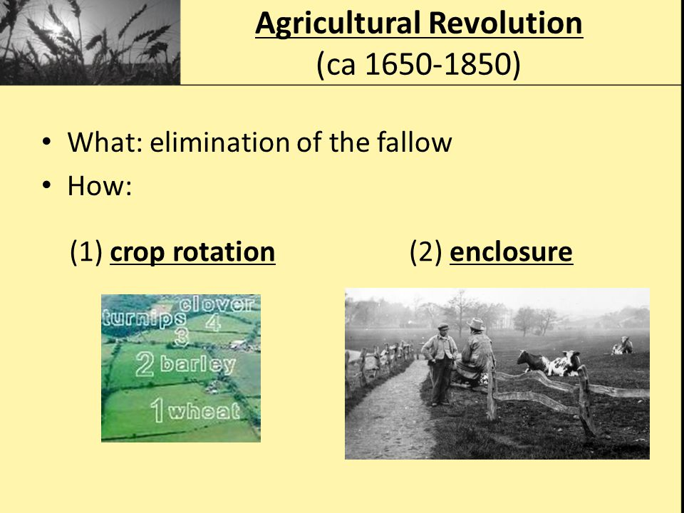 What: elimination of the fallow How: Agricultural Revolution (ca 1650-1850) (1) crop rotation(2) enclosure