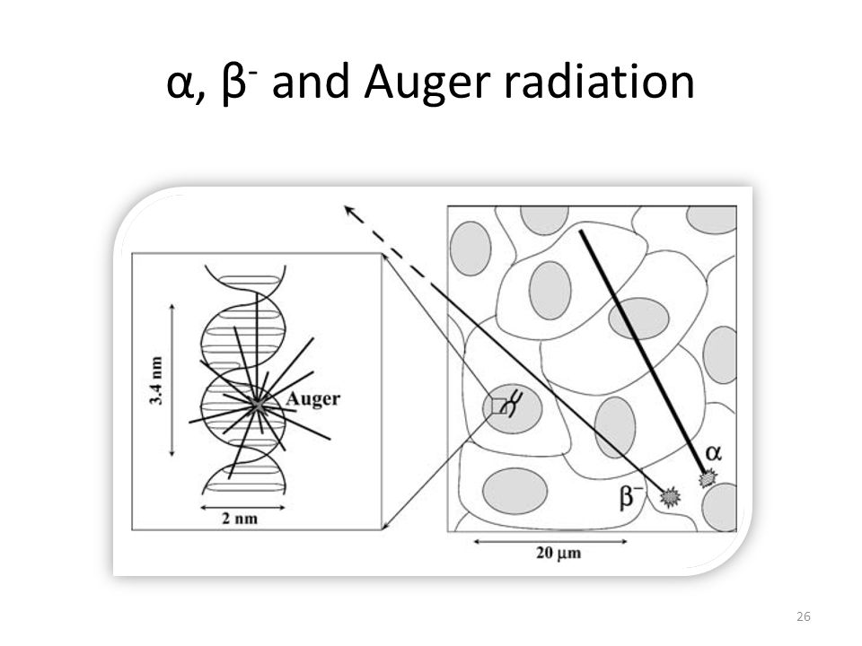 α, β - and Auger radiation 26