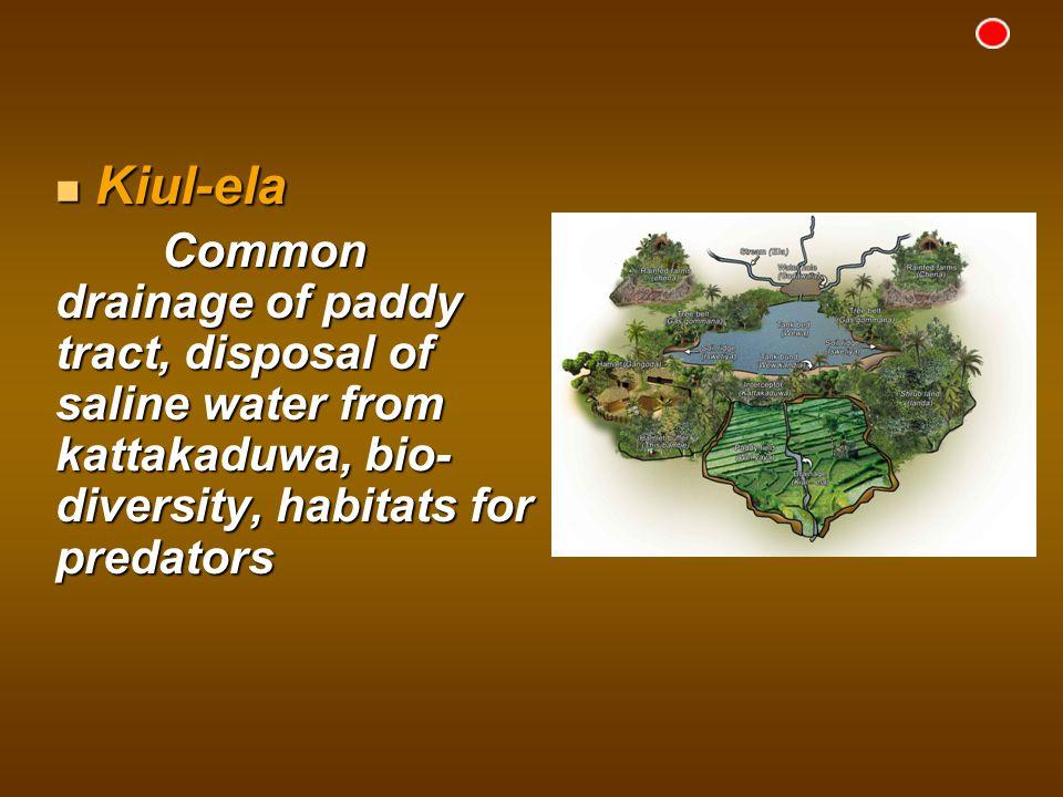 Kiul-ela Kiul-ela Common drainage of paddy tract, disposal of saline water from kattakaduwa, bio- diversity, habitats for predators