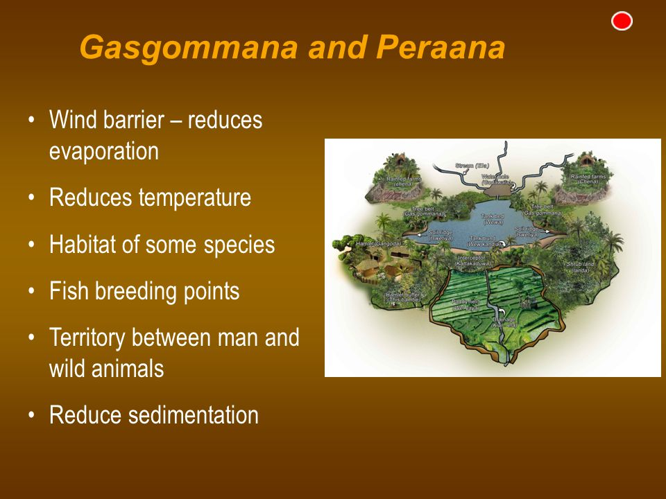 Gasgommana and Peraana Wind barrier – reduces evaporation Reduces temperature Habitat of some species Fish breeding points Territory between man and w