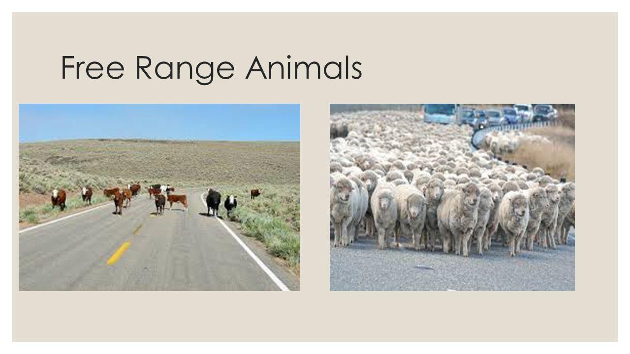 Free Range Animals
