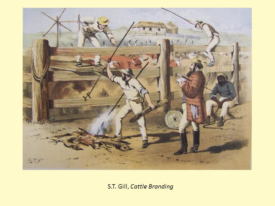 S.T. Gill, Cattle Branding