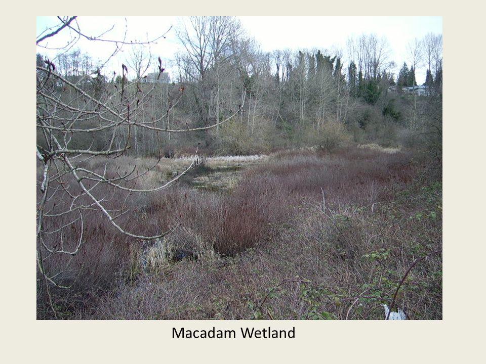 Macadam Wetland