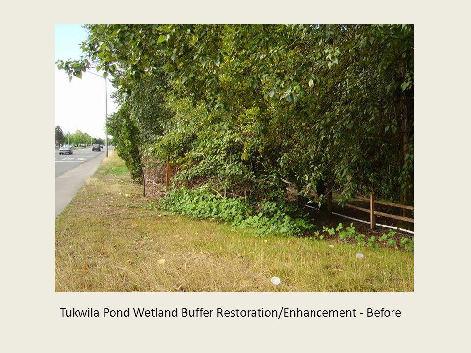 Tukwila Pond Wetland Buffer Restoration/Enhancement - Before