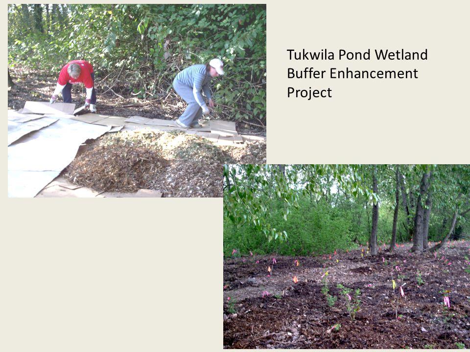 Tukwila Pond Wetland Buffer Enhancement Project