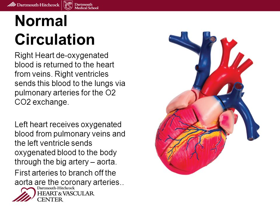 Normal Circulation Right Heart de-oxygenated blood is returned to the heart from veins.
