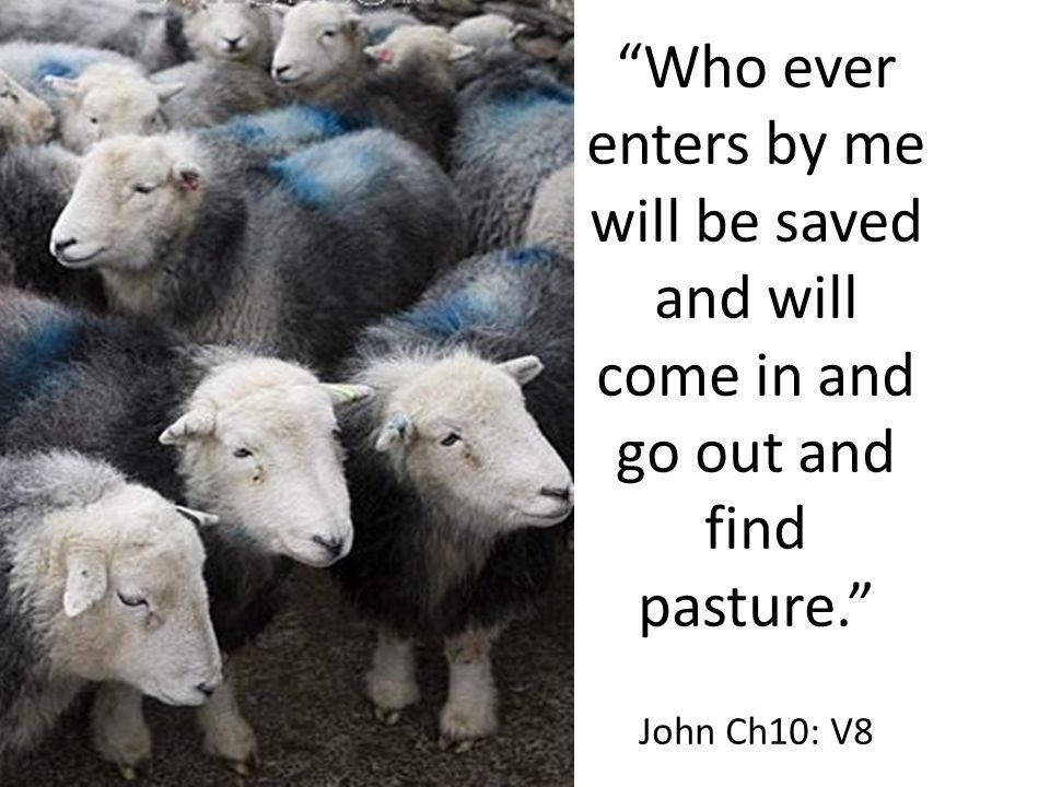 """Who ever enters by me will be saved and will come in and go out and find pasture."" John Ch10: V8"
