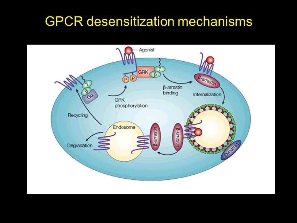 GPCR desensitization mechanisms