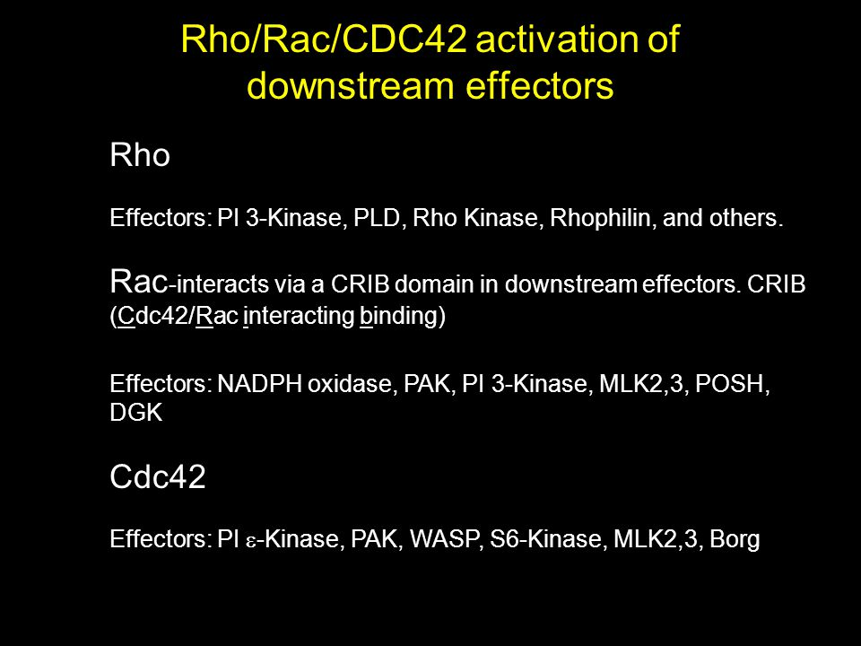 Rho/Rac/CDC42 activation of downstream effectors Rho Effectors: PI 3-Kinase, PLD, Rho Kinase, Rhophilin, and others.
