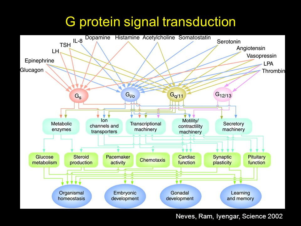 G protein signal transduction Neves, Ram, Iyengar, Science 2002