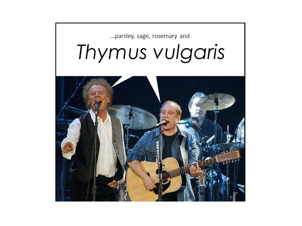 Thymus vulgaris …parsley, sage, rosemary and