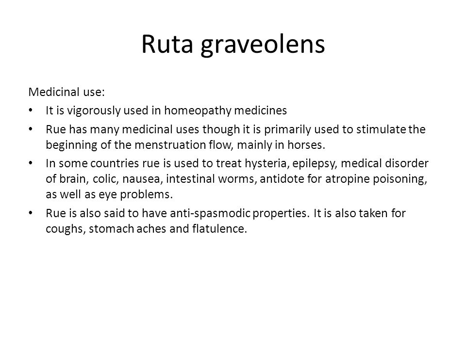 Ruta graveolens Medicinal use: It is vigorously used in homeopathy medicines Rue has many medicinal uses though it is primarily used to stimulate the beginning of the menstruation flow, mainly in horses.