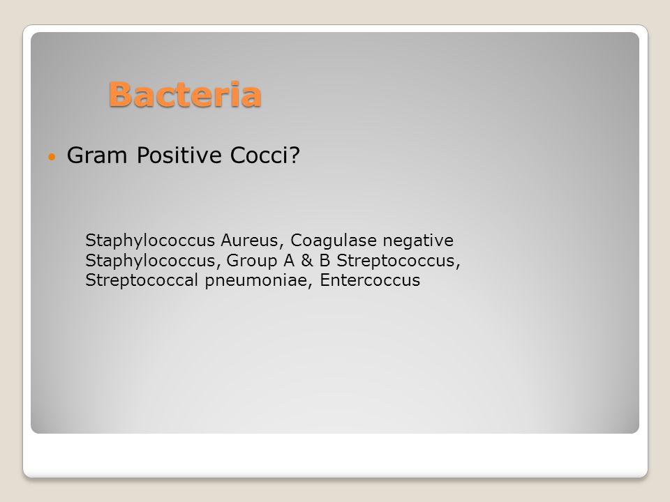 Bacteria Gram Positive Cocci? Staphylococcus Aureus, Coagulase negative Staphylococcus, Group A & B Streptococcus, Streptococcal pneumoniae, Entercocc
