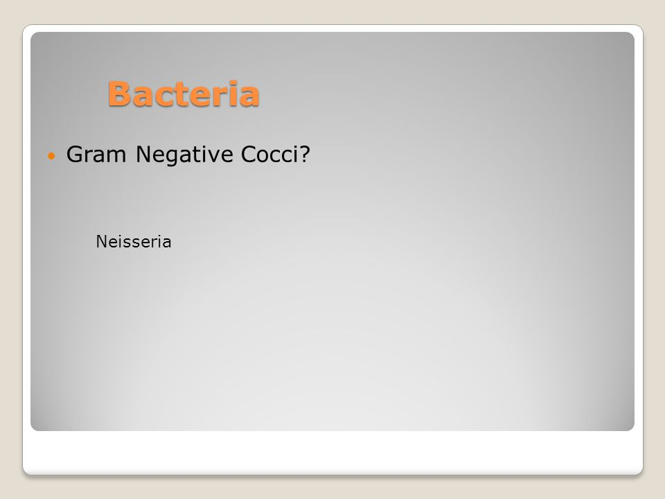 Bacteria Gram Negative Cocci? Neisseria