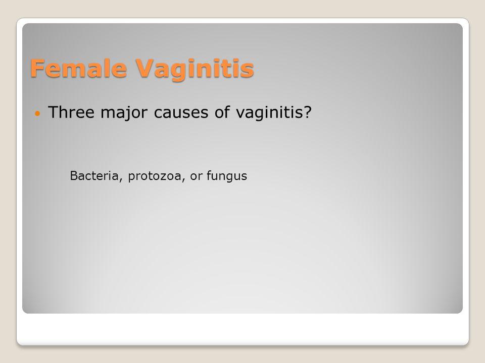 Female Vaginitis Three major causes of vaginitis? Bacteria, protozoa, or fungus