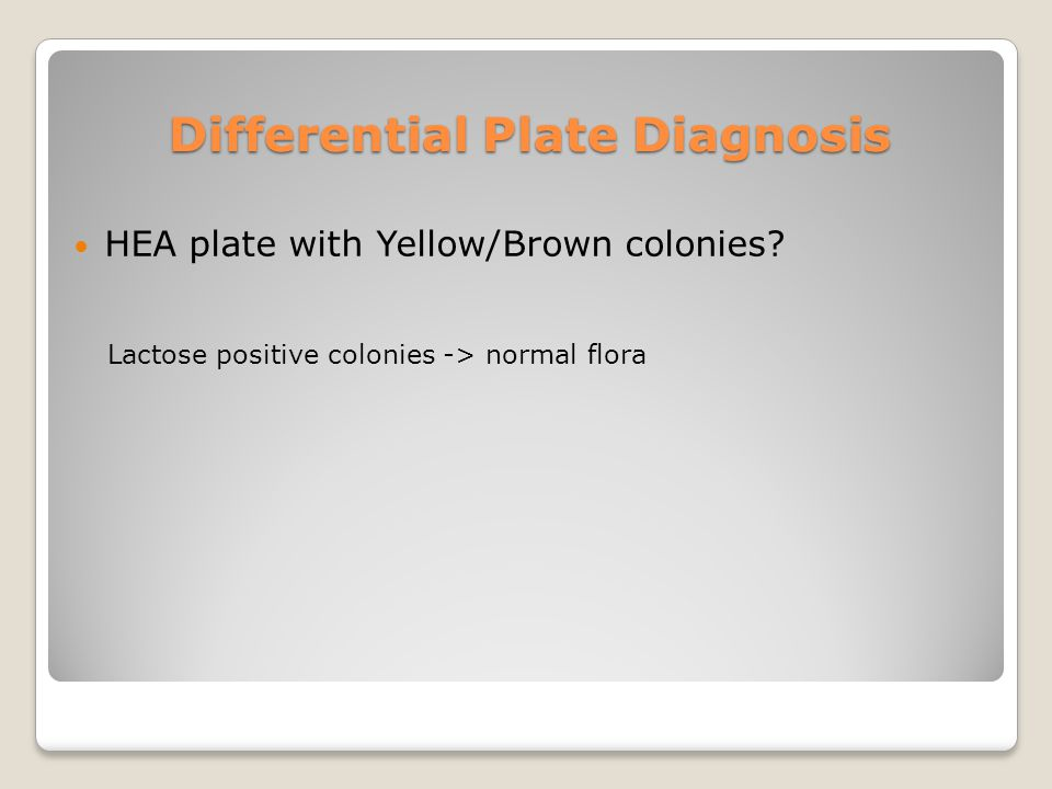 Differential Plate Diagnosis HEA plate with Yellow/Brown colonies.