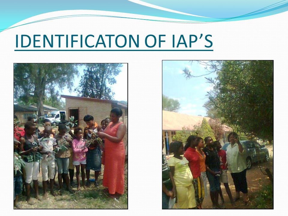 IDENTIFICATION OF IAP'S  CLUSTER  BROAD LEAVES  HUGE