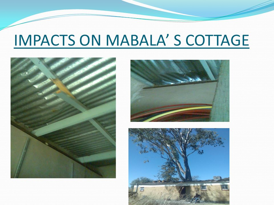 Case study MABALA THE HANDY MAN  Worked since 1996 (13years)  Planted in row as wind breakers  Huge tree for shade over the hall  Multiplied in numbers  Dangerous to him