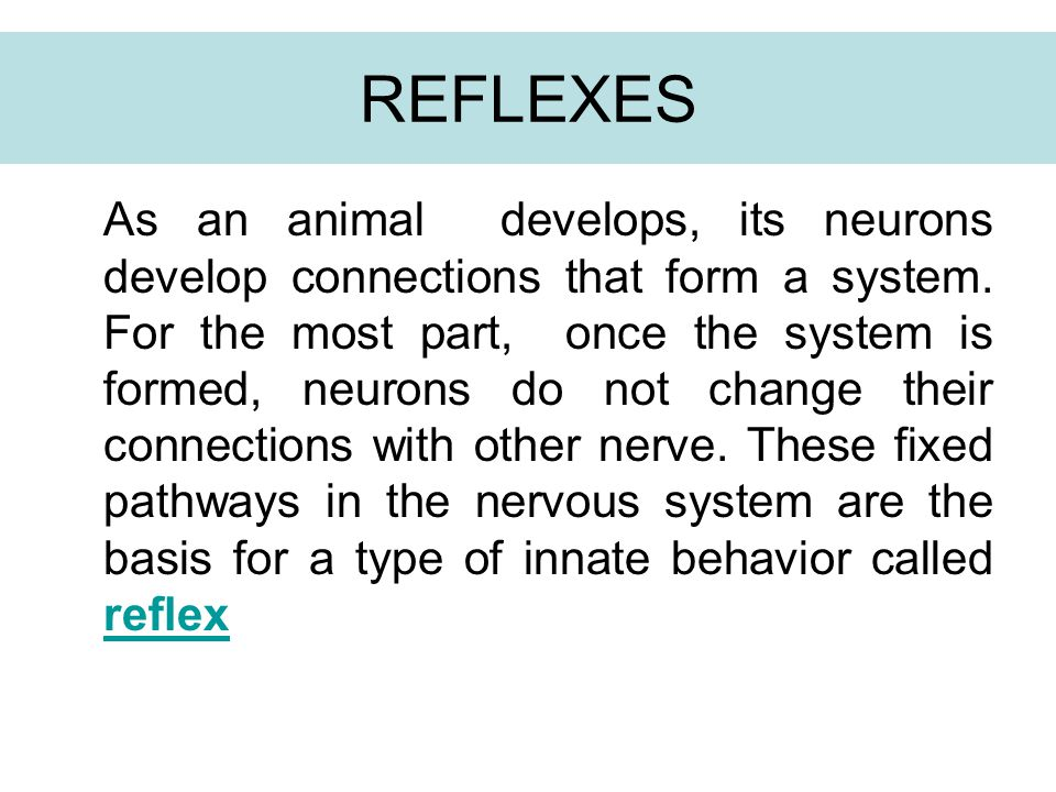 REFLEXES As an animal develops, its neurons develop connections that form a system. For the most part, once the system is formed, neurons do not chang