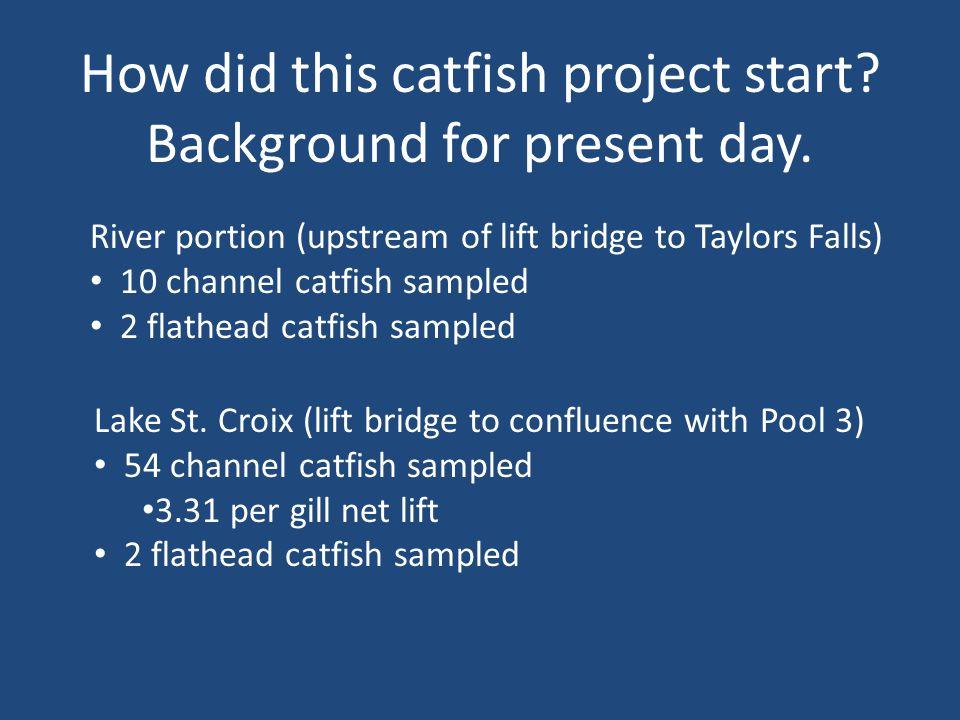 Catfish Tagging Tagging needles