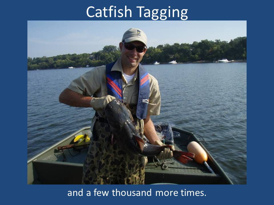 Catfish Tagging and a few thousand more times.