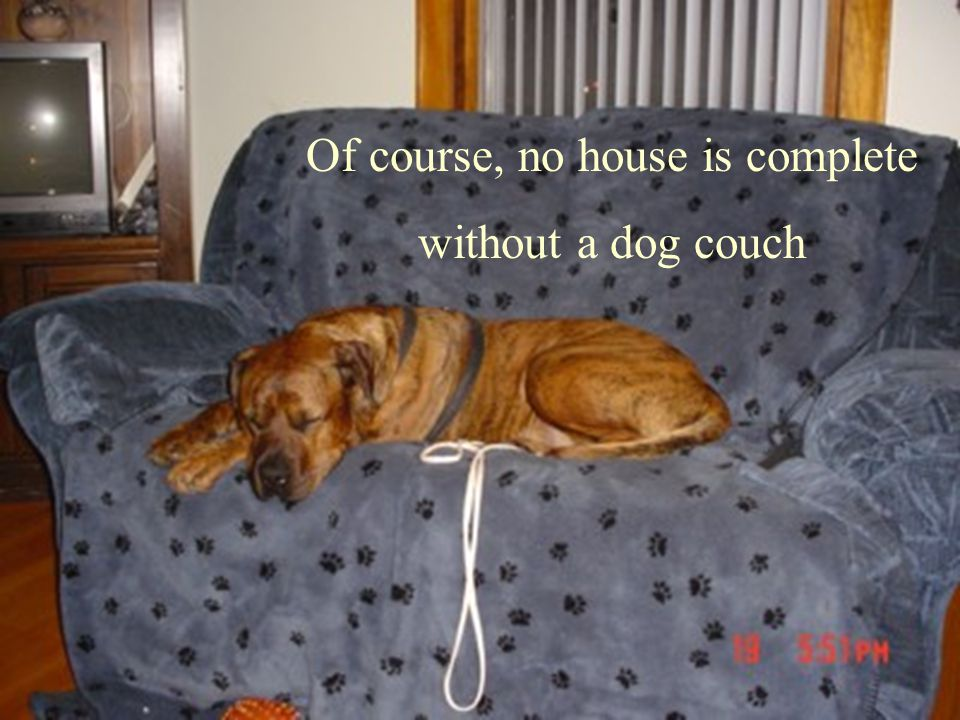 Of course, no house is complete without a dog couch