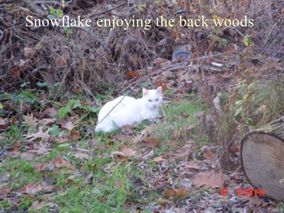 Snowflake enjoying the back woods