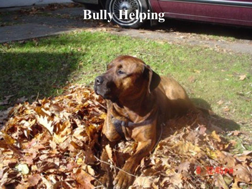 Bully Helping