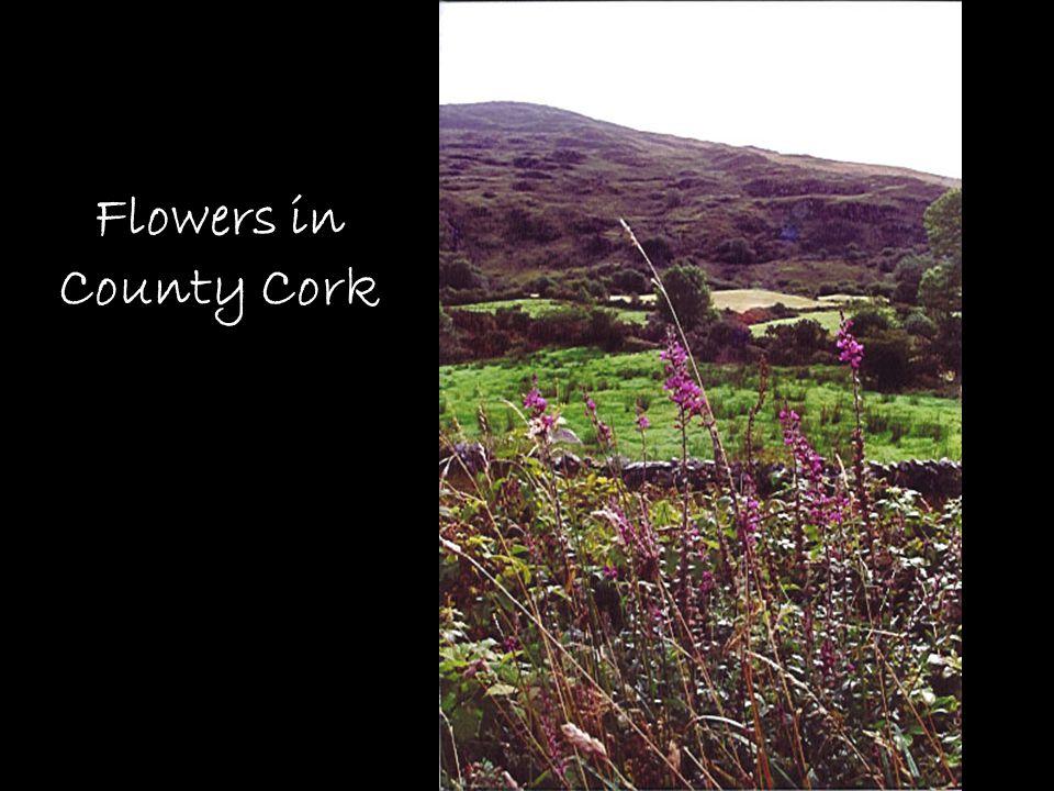 Flowers in County Cork