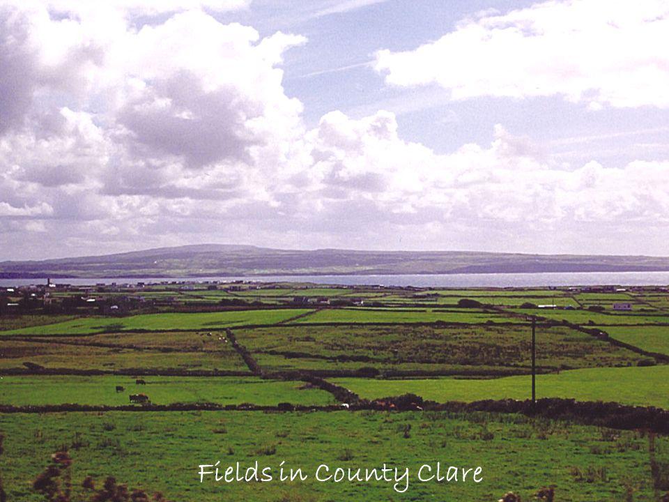 Fields in County Clare