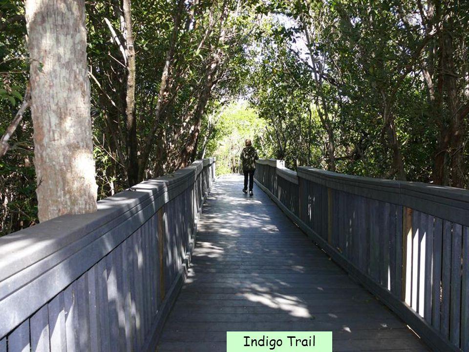 Indigo Trail