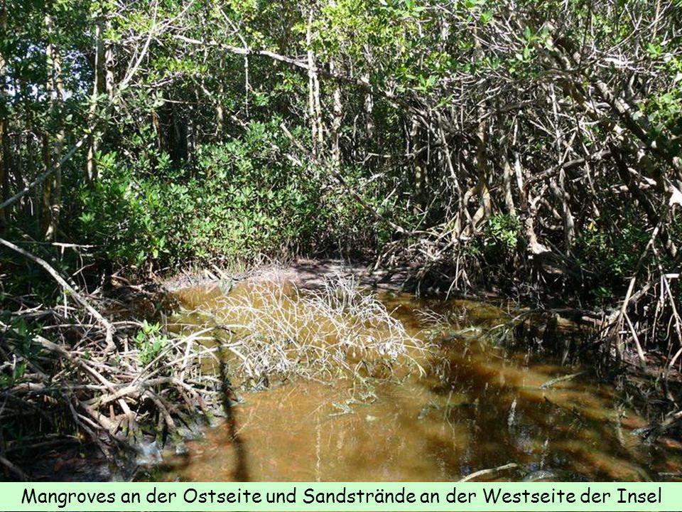 Mangroves an der Ostseite und Sandstrände an der Westseite der Insel