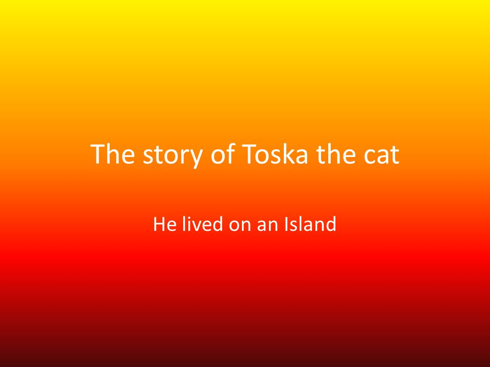 Toska the black and white cat who lived on an Island Toska He strolled around the cottage, with the flowing water streaming by down the hill.