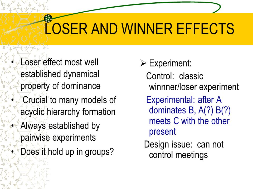 LOSER AND WINNER EFFECTS Loser effect most well established dynamical property of dominance Crucial to many models of acyclic hierarchy formation Always established by pairwise experiments Does it hold up in groups.